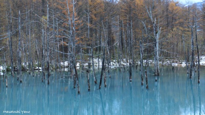 冬を迎えた青い池