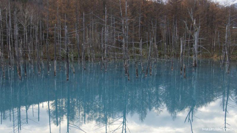 青い池ライトアップ 昼間の様子