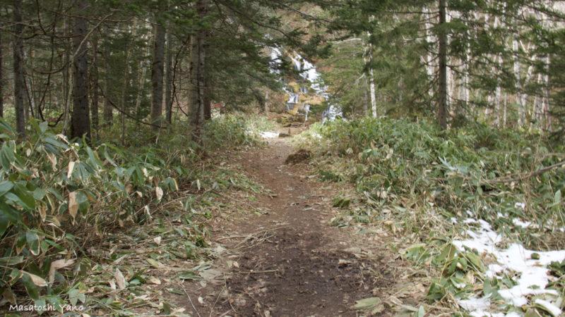 北海道美瑛町の不動の滝に続く林道