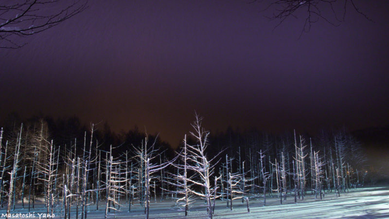 オーロラのようにライトアップされた冬の青い池