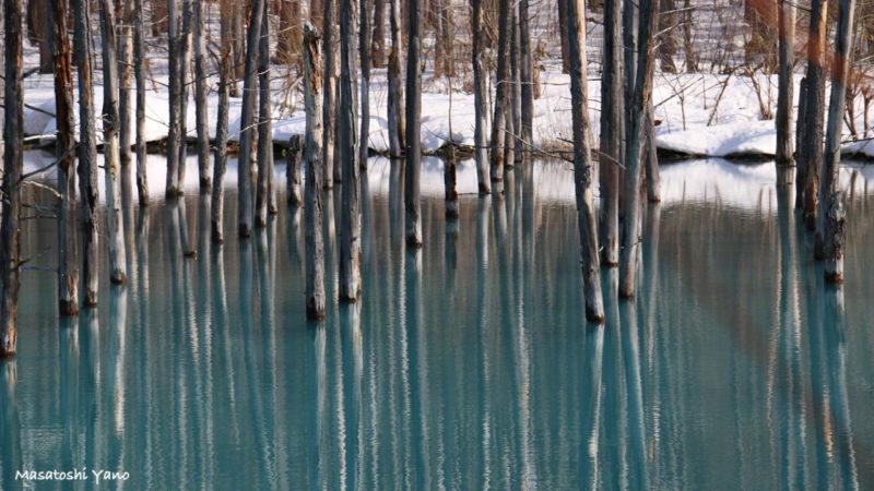 春の青い池