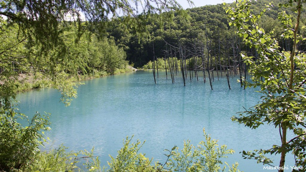 美瑛の青い池2015年まとめ