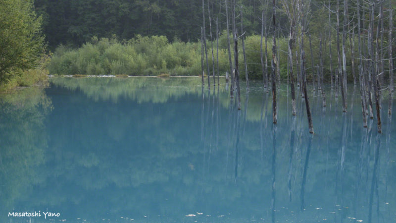 夏の青い池