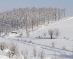 冬の北海道美瑛町の丘