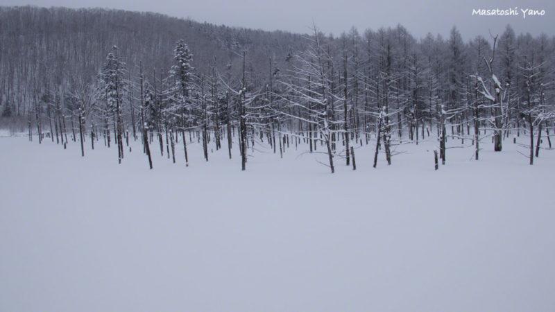 真冬で雪が積もった青い池