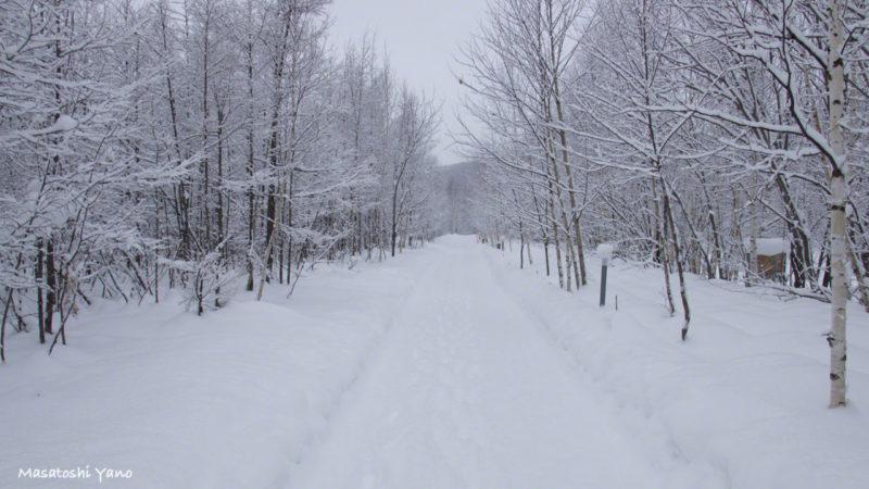 真冬の青い池につづく道
