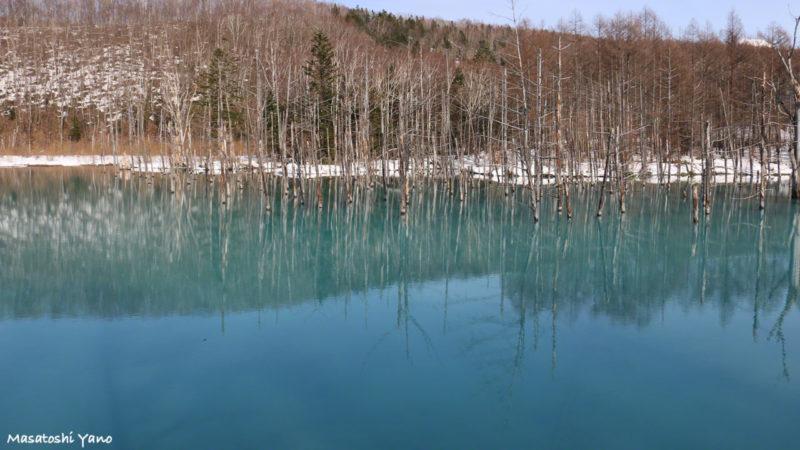 土砂すくいの工事がされる前の青い池。2015年4月4日に撮影された写真。