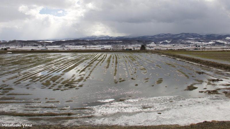 北海道の畑の雪解け