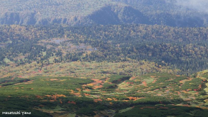 旭岳7合目の紅葉の景色