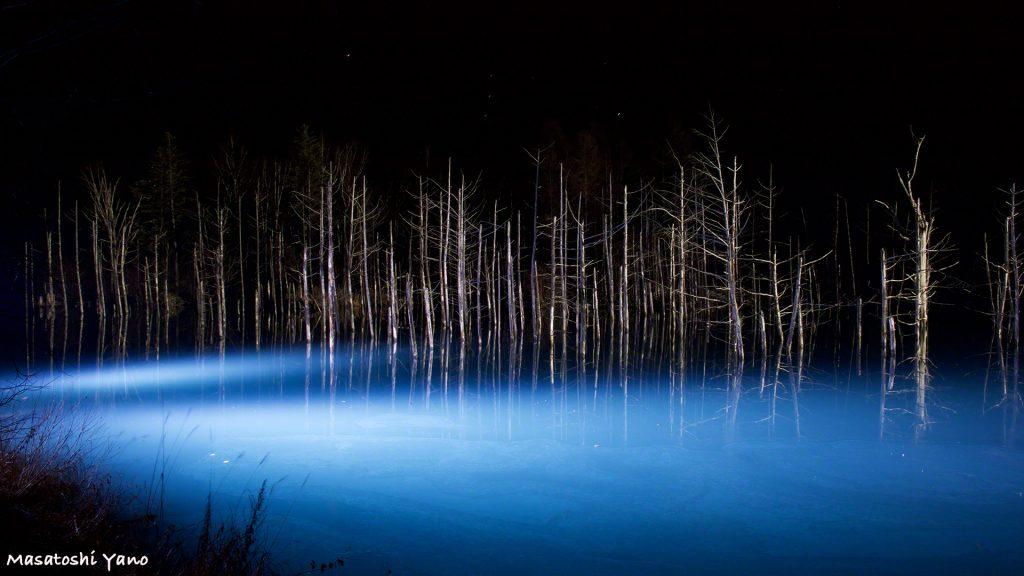 【動画付き】なんど行っても楽しい!美瑛の青い池ライトアップ