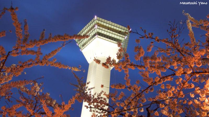 函館ライトアップされた五稜郭タワーと桜