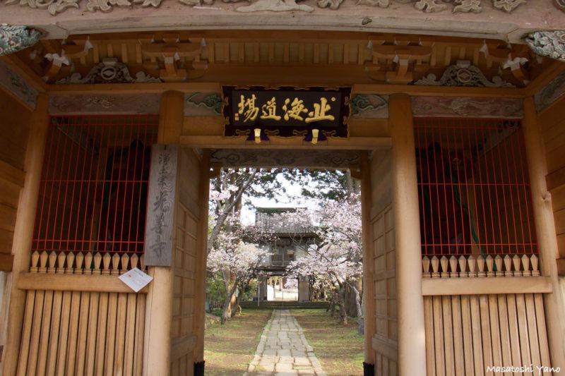 光善寺の門