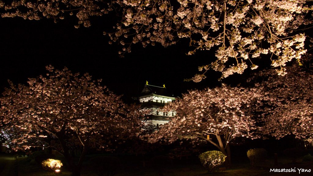松前城のライトアップ暗闇に桜と照らし出される姿は圧巻なり