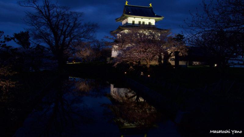 ライトアップされた松前城と桜。ブルーモーメントの時間帯に撮影。