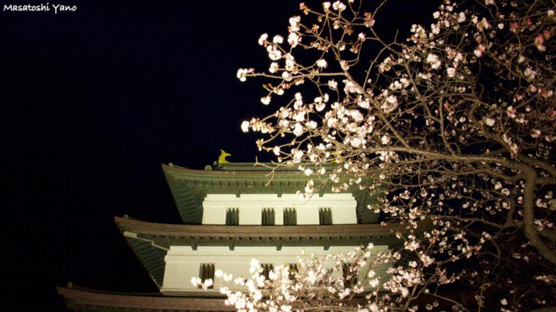 ライトアップされた松前城と桜