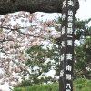 松前町にある夫婦桜の看板