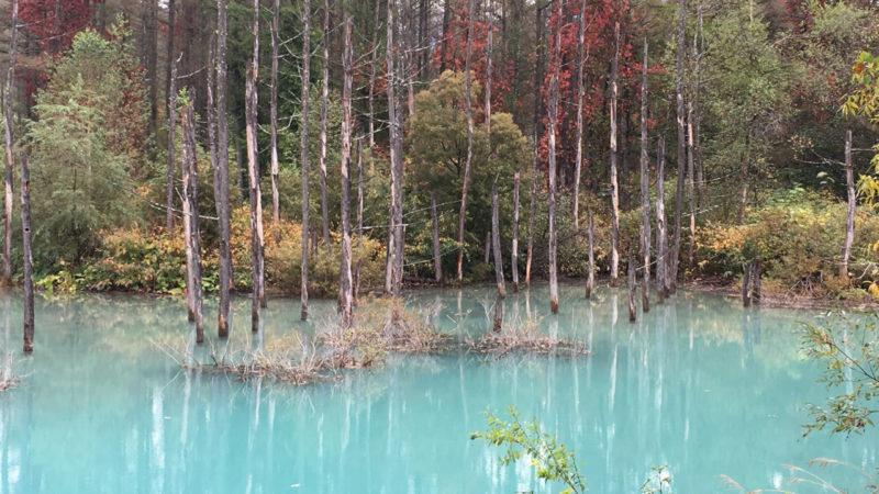 2015年初秋の青い池