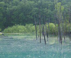 6月の青い池