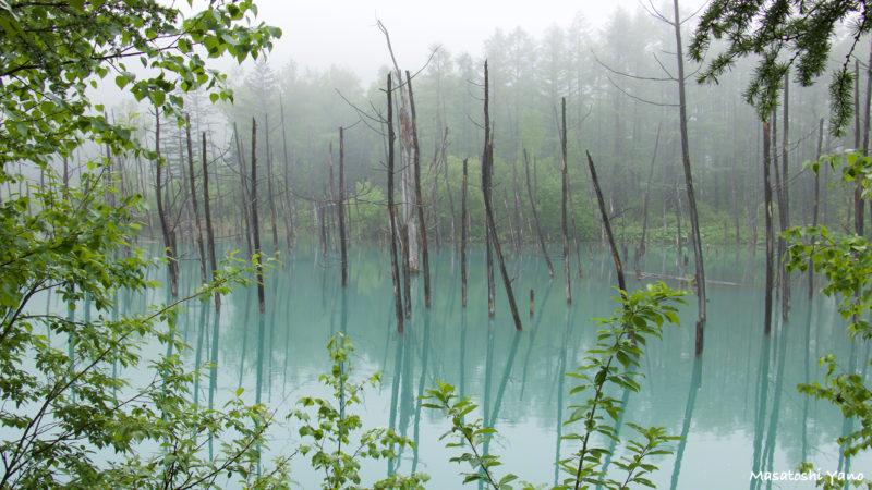濃霧に撮影した青い池