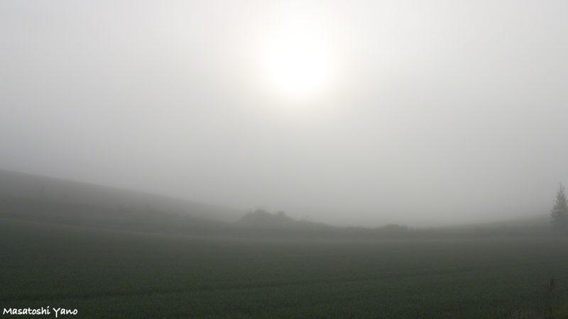 早朝に濃霧が発生した美瑛の丘