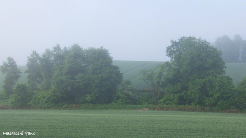 美瑛丘の霧が晴れていく風景