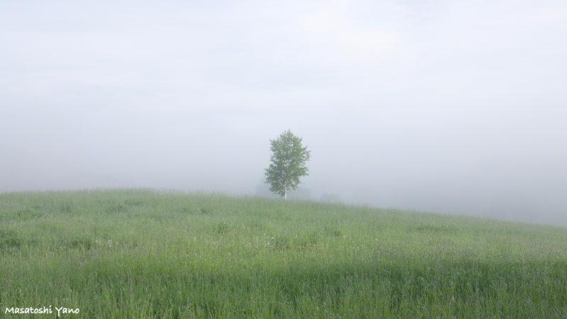 美瑛の丘の霧が晴れていく風景