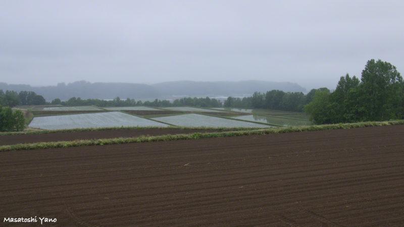 霧がかった田園風景