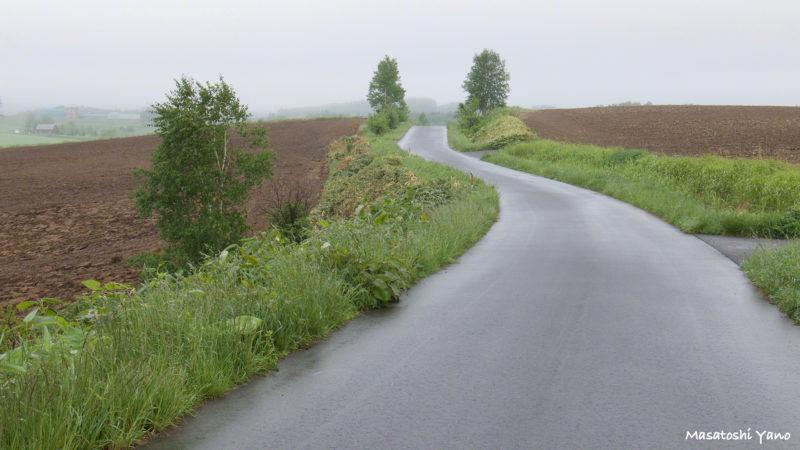 美瑛、雨あがり直後の農道