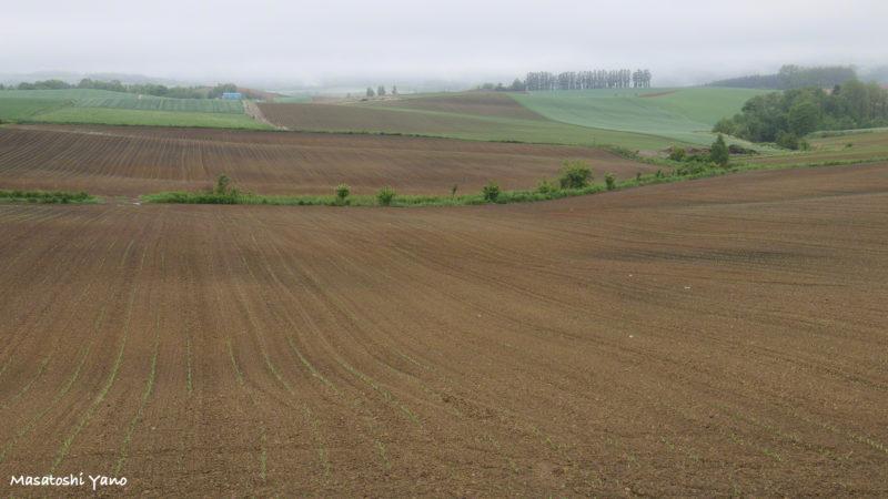 雨上がり直後のパッチワークの丘