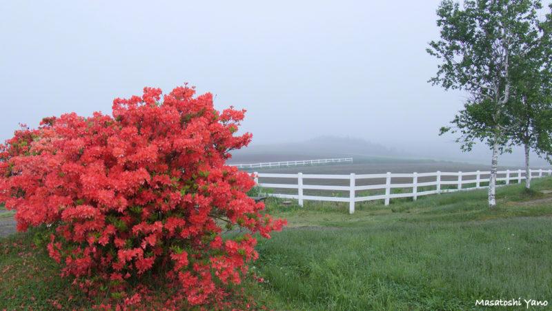 新栄の丘に咲く赤い花
