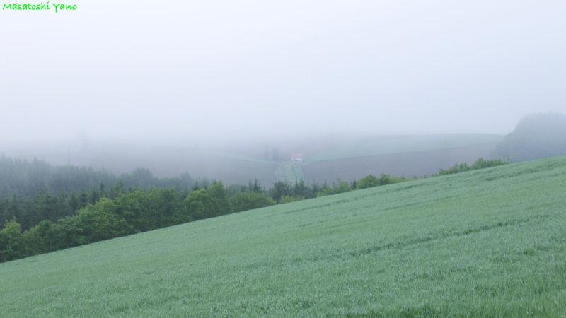 早朝、霧がかった新栄の丘