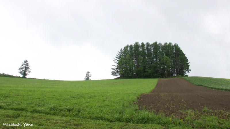 雨の日のマイルドセブンの丘