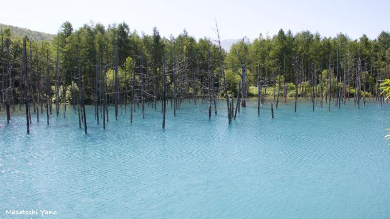 2015年夏の青みが強い青い池