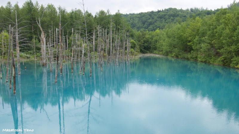 青が見づらい青い池
