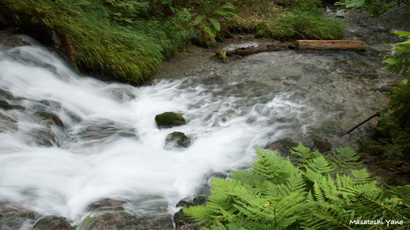 夏の不動の滝