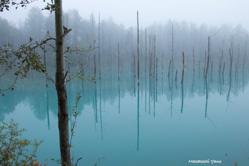 復旧したばかりの早朝の青い池、朝霧は自然の画材だ