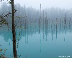 復旧した青い池、早朝に撮影