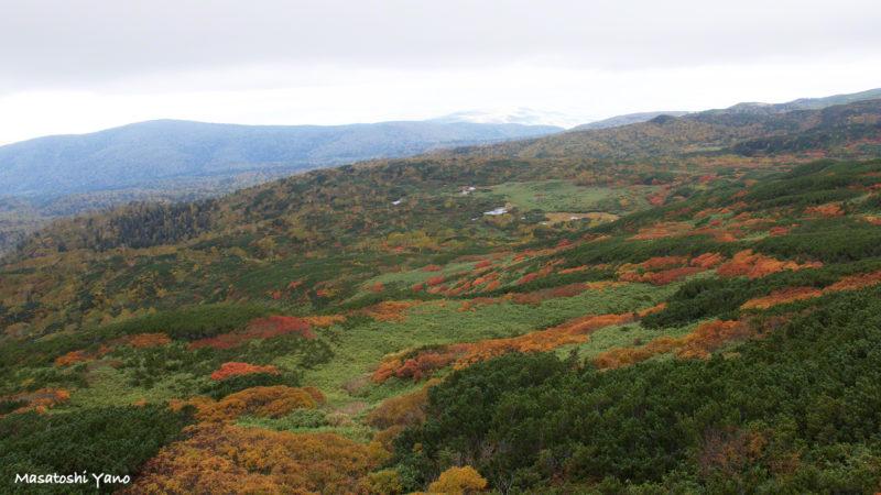 旭岳ロープウェイ乗り場からの紅葉の写真