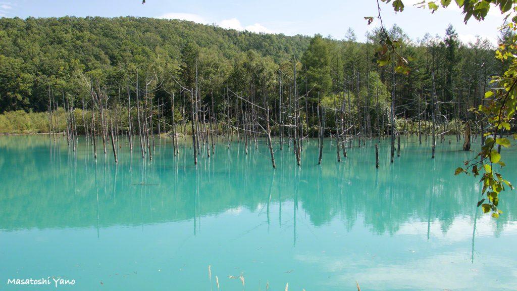 台風の被害から復旧した青い池、神秘的な景色はかわらず健在