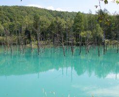 台風被害から復旧した青い池