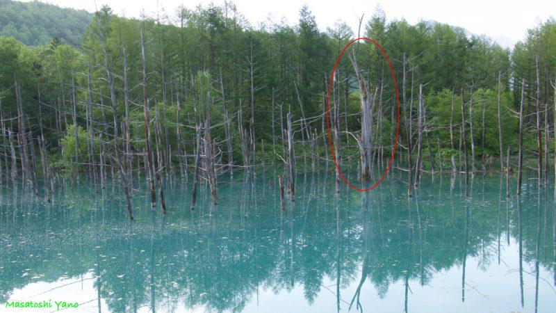 台風前の青い池