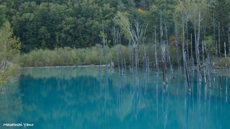 10月紅葉前の青い池