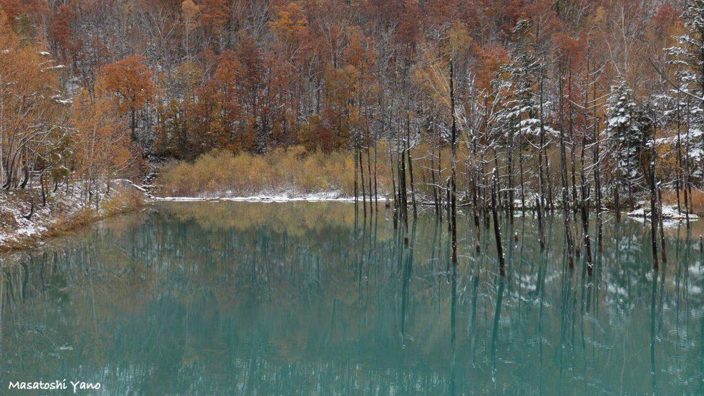 初雪の青い池のリベンジ!!はたして青い池を青く鮮やかに撮ることはできるか!?