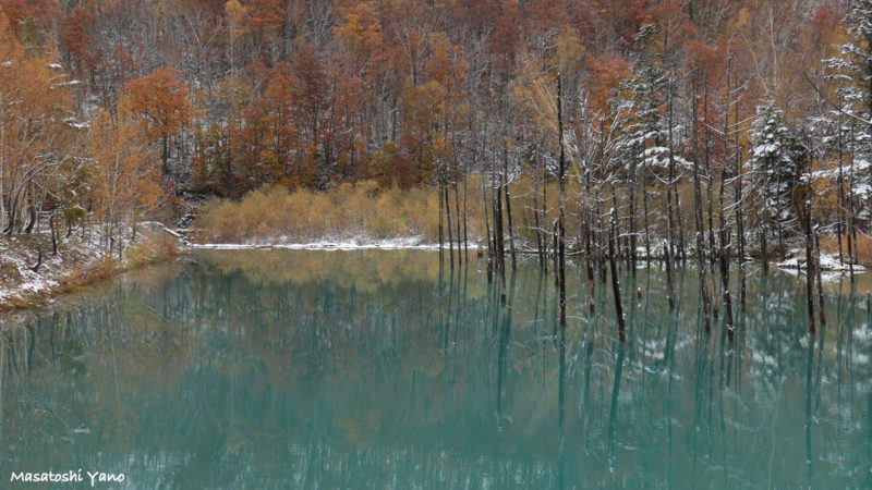 青い池 初雪の次の日