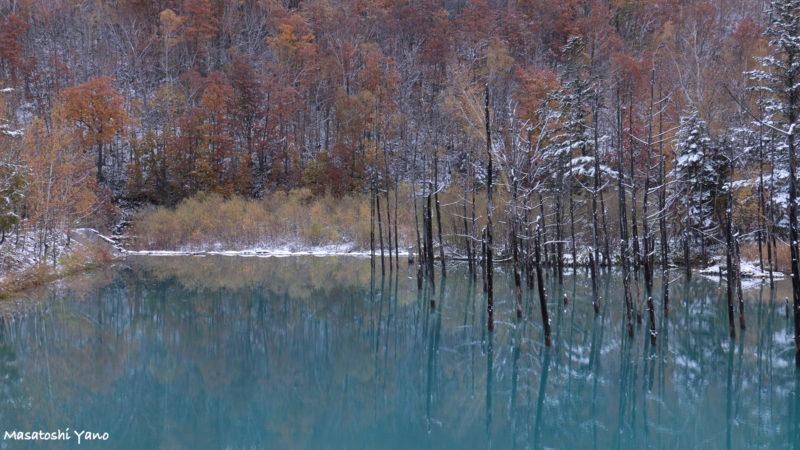 初雪の次の日青い池