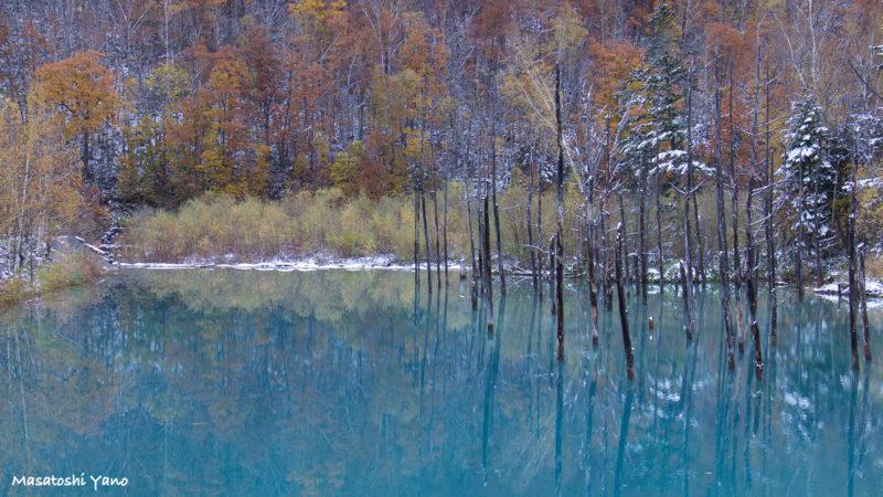 初雪の次の日の青い池 カメラで色補正