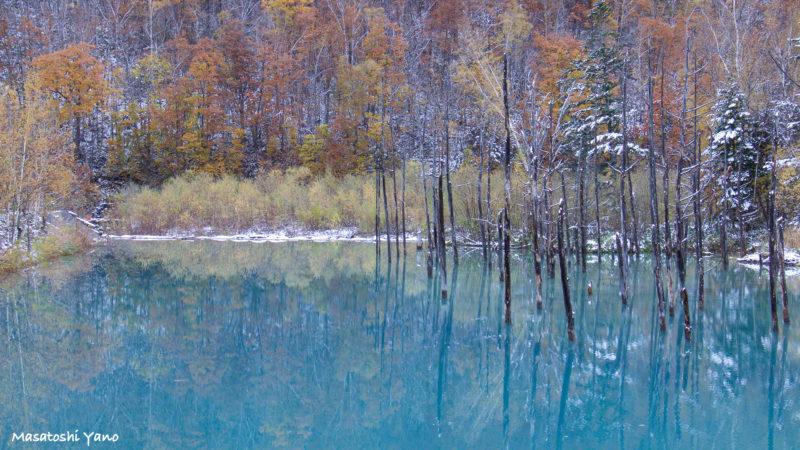 初雪の次の日の青い池