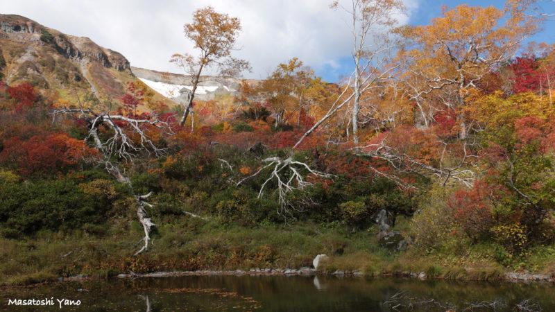 鴨沼の紅葉