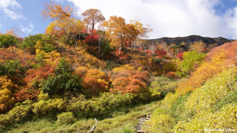 鴨沼周辺の紅葉