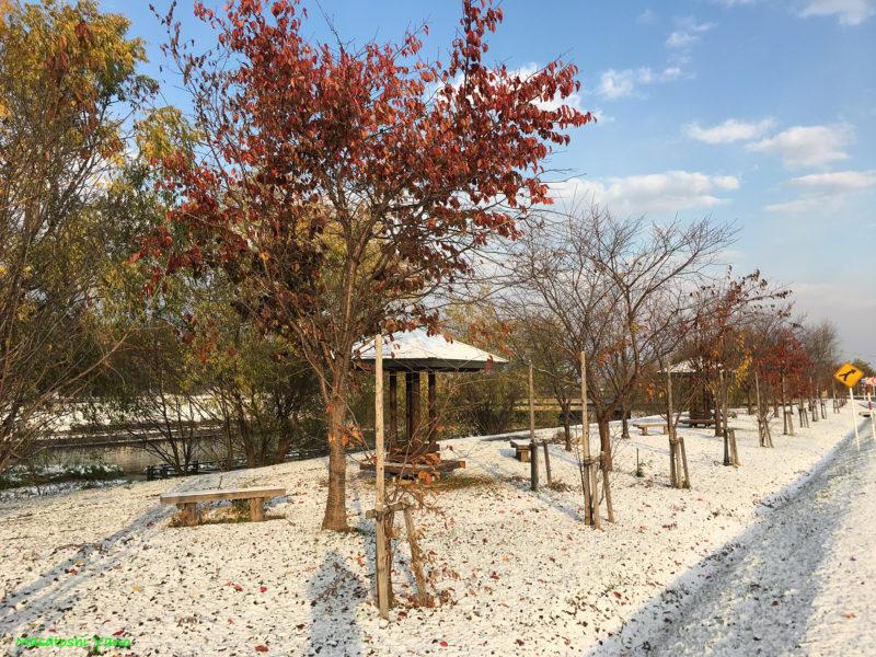 秋に雪が降った公園